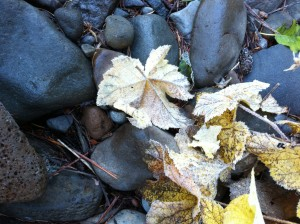 Where I admired frosted leaves . . .
