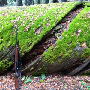 I wandered and rested until evening, marveling at this fallen giant . . . with my rifle for perspective.